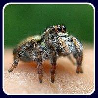 spider bite first aid